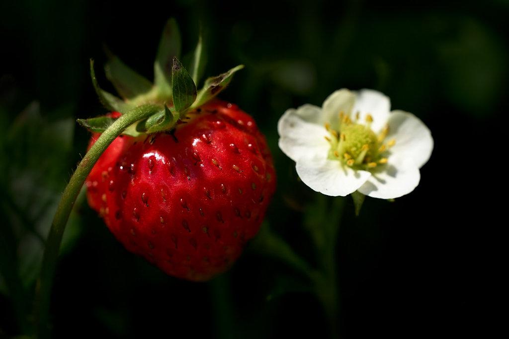 Von Blühten, Früchten und Sechsfüßern