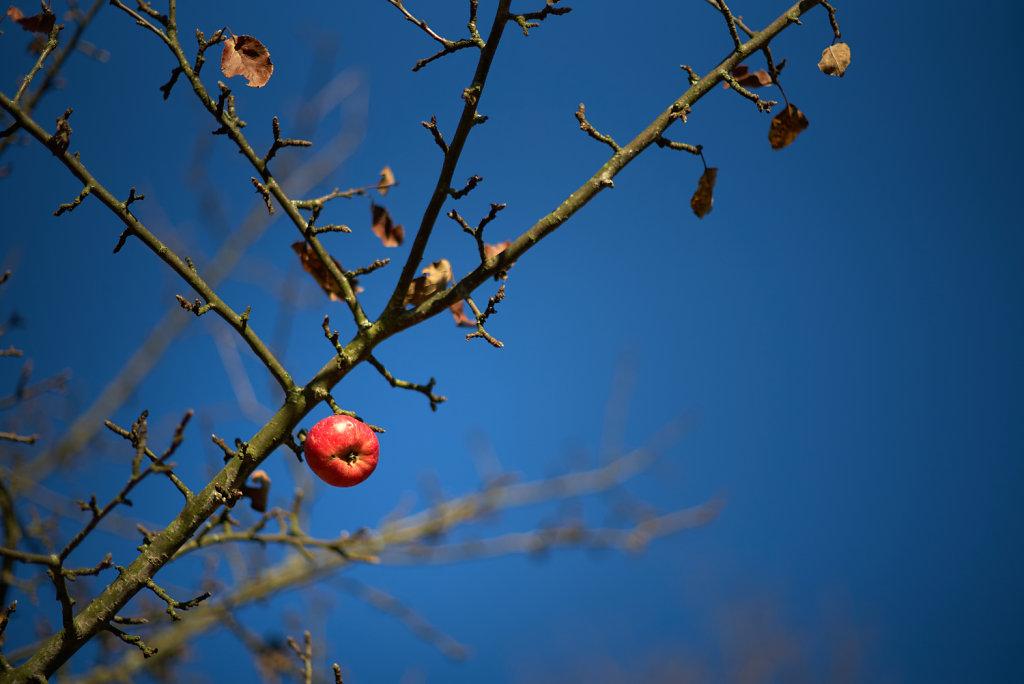 Kleiner-Apfel.jpg
