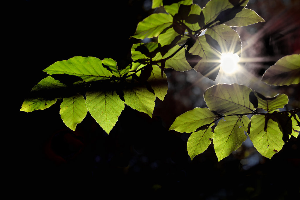 Sonnenblaetter.jpg